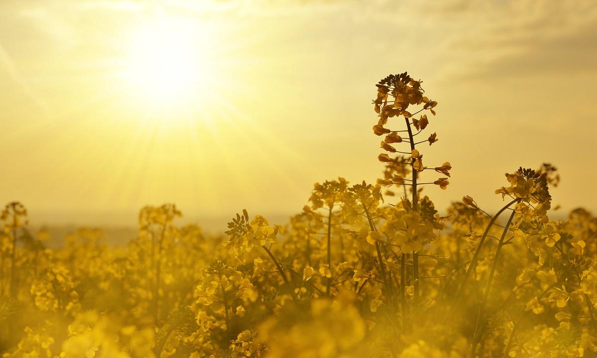 Sonne und Vitamin D